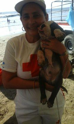 Esta dama se dio a la tarea de cuidar y entregar esta mascota a sus dueños.