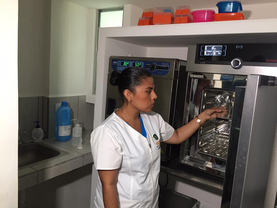 Nicaragua incursiona con Técnica de Fertilización In VitroAnimal
