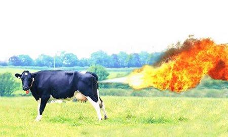 En Camoapa: Pedos de las vacas menoscontaminantes