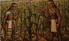 ¿Conoce la historia del frijol, maíz, sorgo yarroz?
