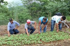 Instituto Nicaragüense de Tecnología Agropecuaria facilita el acceso a tecnologías de información y comunicación a familiasproductoras